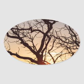 Tree Branches Dancing In The Sunlight Oval Sticker