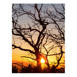 Tree Branches Dancing In The Sunlight Postcard