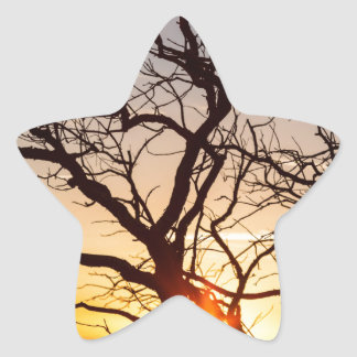 Tree Branches Dancing In The Sunlight Star Sticker