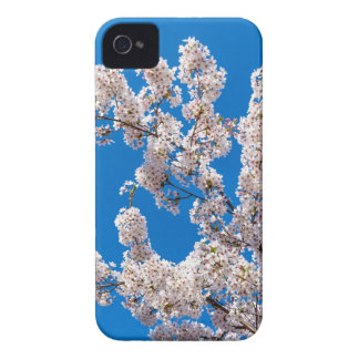 Tree branches with blooming white flowers iPhone 4 Case-Mate cases