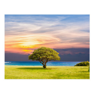 Tree by the Ocean Postcard