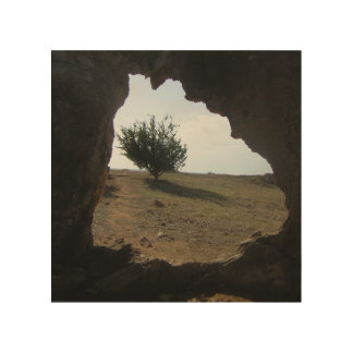 Tree Cave Travel Photograph Wood Wall Art