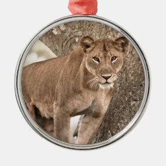 Tree-climbing lion, Uganda Africa Silver-Colored Round Ornament