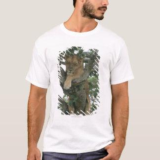 Tree climbing lioness (Panthera leo), Queen T-Shirt