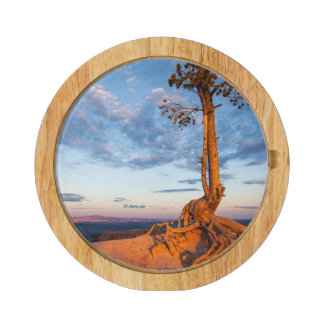 Tree Clings to Ledge, Bryce Canyon National Park Rectangular Cheese Board
