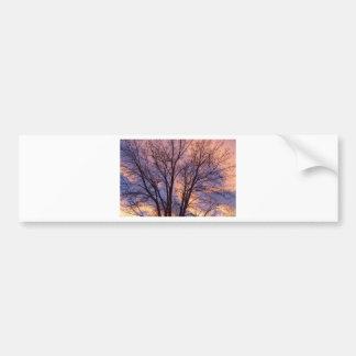 Tree Colors Of The Night Bumper Sticker