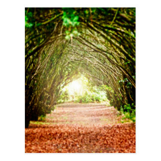 Tree Corridor Postcard