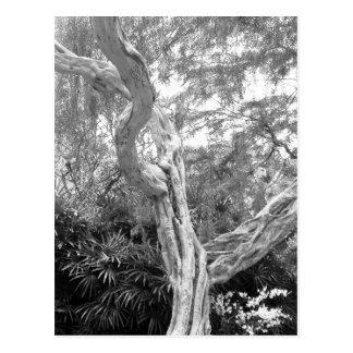 Tree covered in Graffiti Postcard