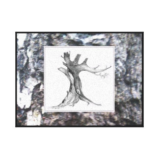 Tree Drawing on Tree Bark Photo BandW Canvas Print