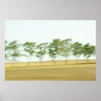 Tree drifts poster