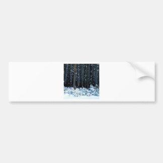 Tree Eastern White Pine Pocono Bumper Sticker