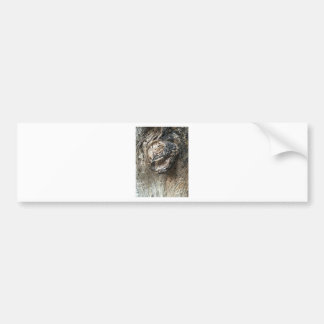 Tree Eyes Bumper Sticker