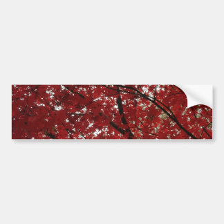 Tree Fall Season Red Brown Autumn Leaves Bumper Sticker
