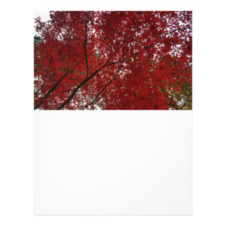 Tree Fall Season Red Brown Autumn Leaves Custom Letterhead