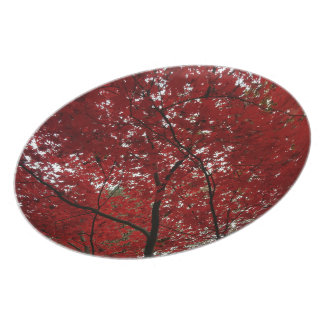 Tree Fall Season Red Brown Autumn Leaves Plate