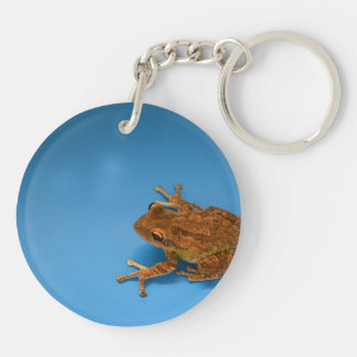 Tree frog against blue background on right acrylic key chain