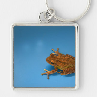 Tree frog against blue background on right key chain