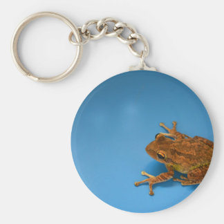 Tree frog against blue background on right keychains
