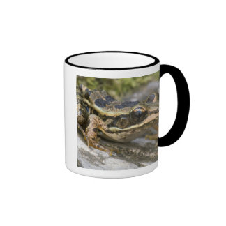 Tree frog at the entrance to small cave, ringer coffee mug