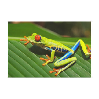 Tree-frog Canvas Print