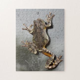 Tree Frog Climbing Rainy Window Photographic Art Jigsaw Puzzle