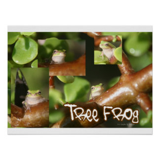 Tree Frog Collage, same frog different poses Poster