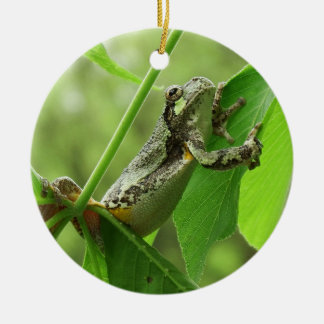 Tree Frog Hanging On Ceramic Ornament