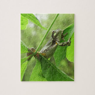 Tree Frog Hanging On Jigsaw Puzzle