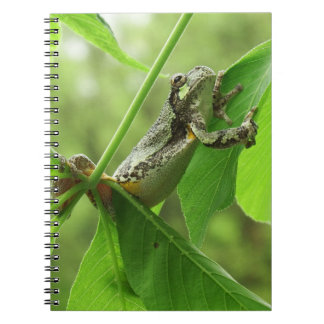 Tree Frog Hanging On Notebook