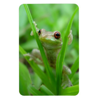 Tree Frog holding on Flexi Magnet