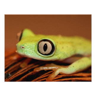 tree frog announcements