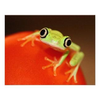 tree frog invite