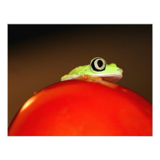 tree frog custom announcements
