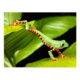 Tree Frog Jump Postcard