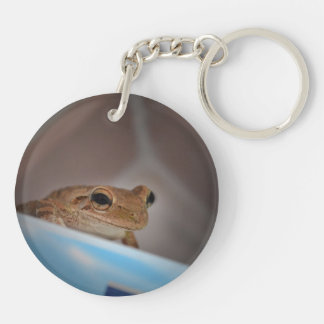 tree frog looking at viewer on blue keychains