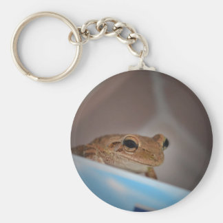 tree frog looking at viewer on blue key chains