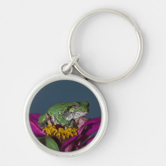 Tree Frog Lounging Key Chain