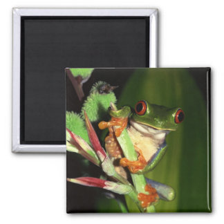 Tree Frog magnet