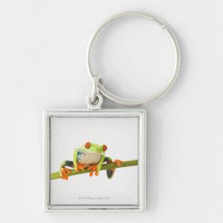 Tree frog on stem key chain