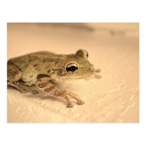 tree frog sepia looking right animal image post card