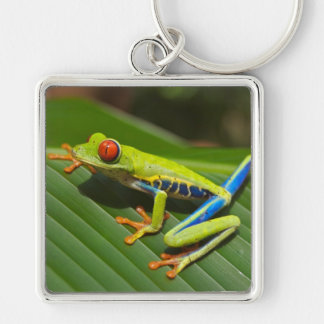 Tree Frog Silver-Colored Square Keychain