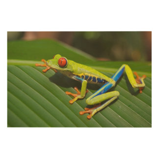 Tree-frog Wood Wall Decor