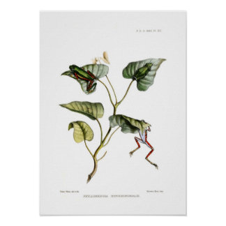 Tree frogs poster