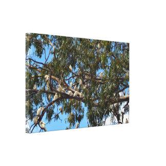 Tree Full Of White Australian Wild Cockatoos, Canvas Print