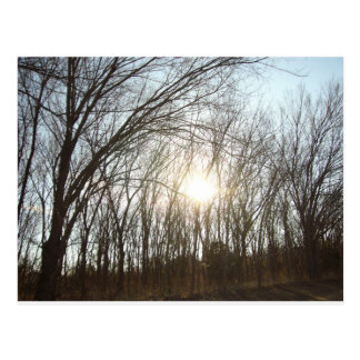 Tree Grove with Sunlight Postcard