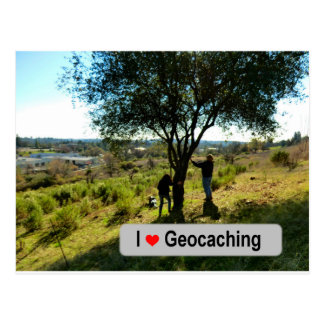 Tree hanger cache in Geocaching Postcard