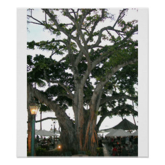 Tree Honolulu, Hawaii Waikiki beach Poster