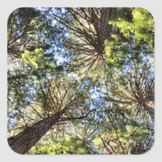 Tree Hugger Pattern Square Sticker