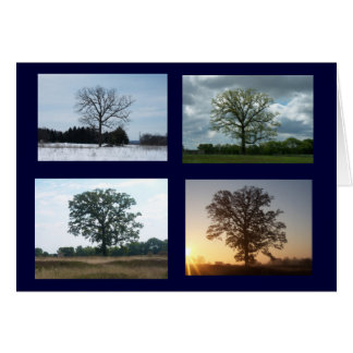 Tree in 4 Seasons Card