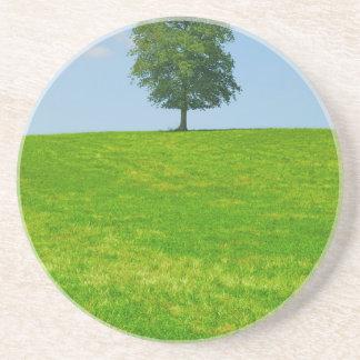 Tree in  a field coaster